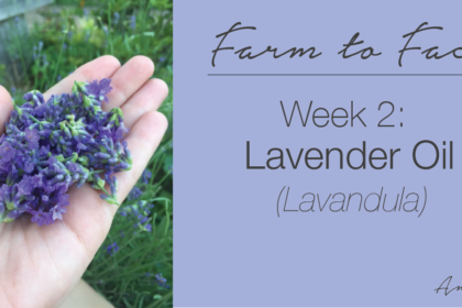 how to make lavender oil | farm to face