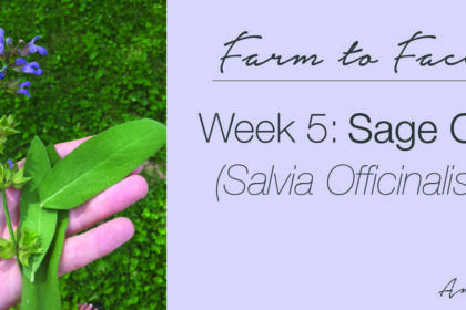 how to make sage (salvia officinalis) oil | farm to face